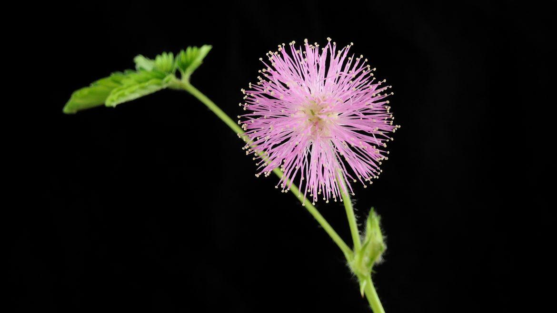 Violet plante maison for Plante maison