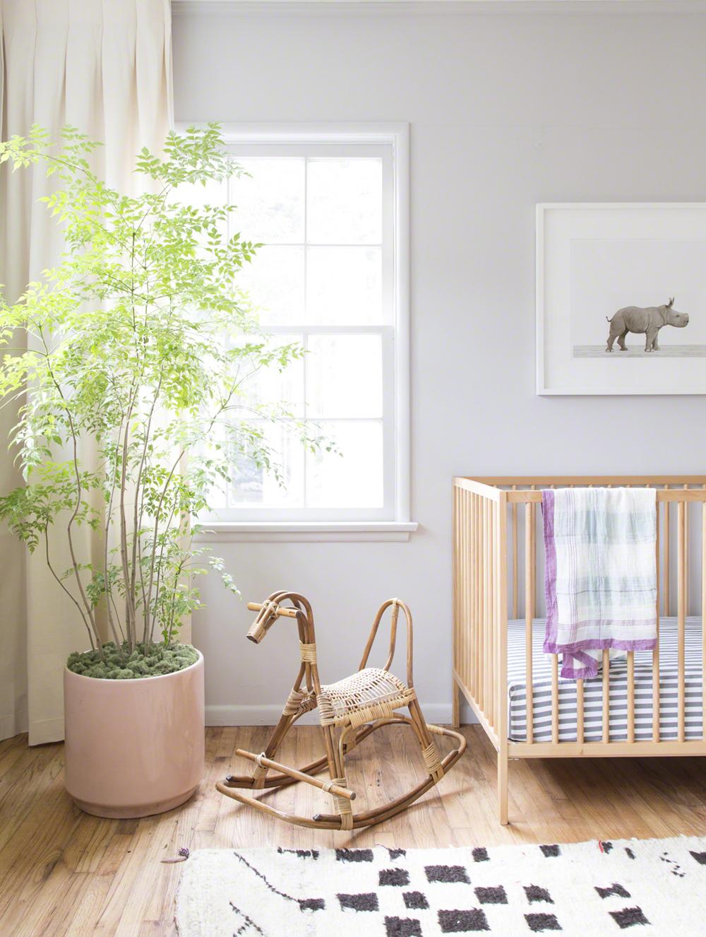 Les plantes dans les chambres plante maison - Chambre plante ...