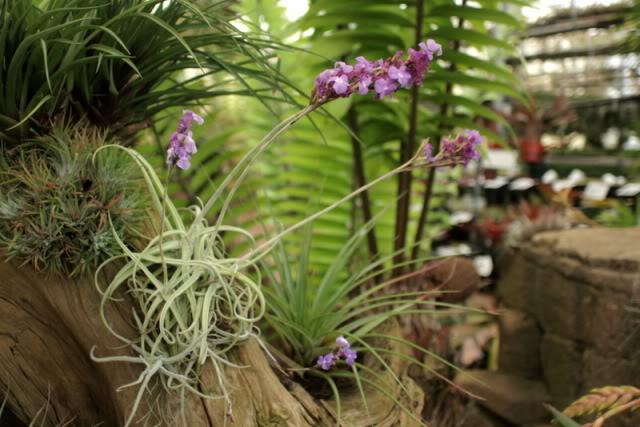Plantes d int rieur plante maison for Plante maison