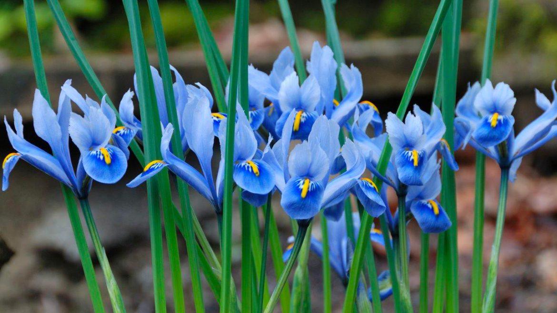 Bleu plante maison for Plante maison