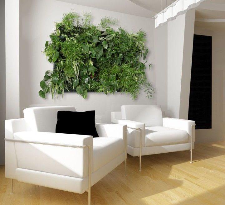 Plantes d'intérieur - Plante Maison