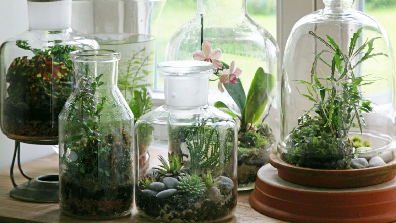 Jardin miniature plante maison - Plantes pour jardin japonais miniature ...